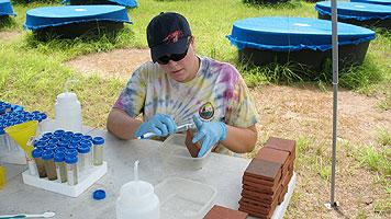 USF Biology doctoral candidate Taegan McMahon works in field on chlorothalinol study