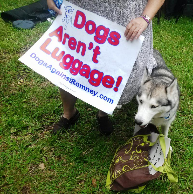 """A """"protestor"""" at Sunday's """"Dogs Against Romney"""" rally at Lykes Gaslight Park."""