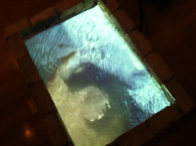 Reflections of a manatee from a video projection into a pool of white sand. The art installation was part of the 2012 Tampa Cuban Sandwich Show.