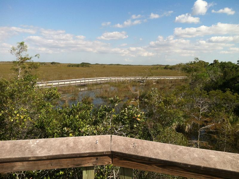 Everglades from Pay-hay-okee overlook