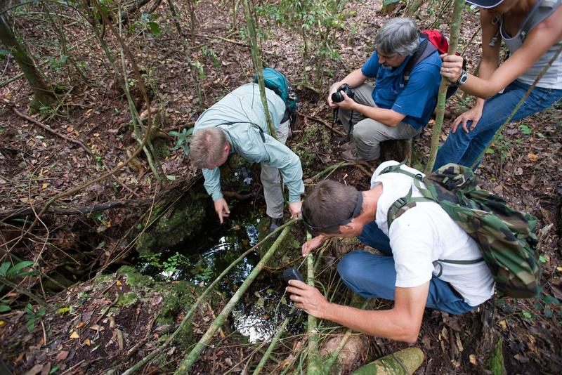 From left, Selby Gardens botanist Bruce Holst, George Gann, director of the Institute for Regional Conservation, Selby Gardens education director Jeannie Perales and Everglades park biologist  Jimi Sadle inspect a fern in a tropical hardwood hammock