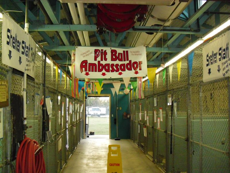 The Ambassador Kennels