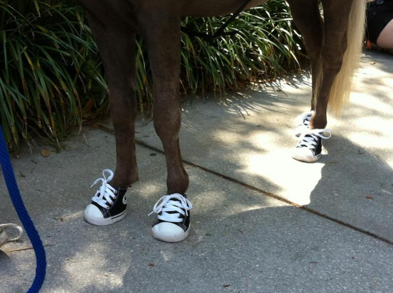 Yes, Scooby Boo is wearing sneakers