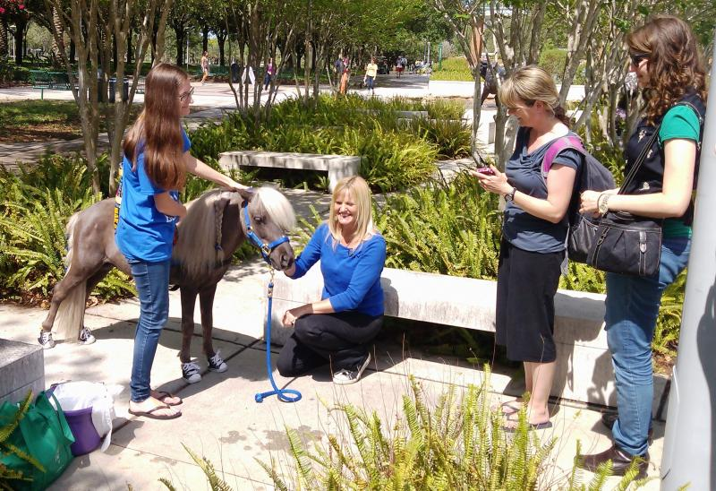 USF students meet mini-stallion Scooby Boo