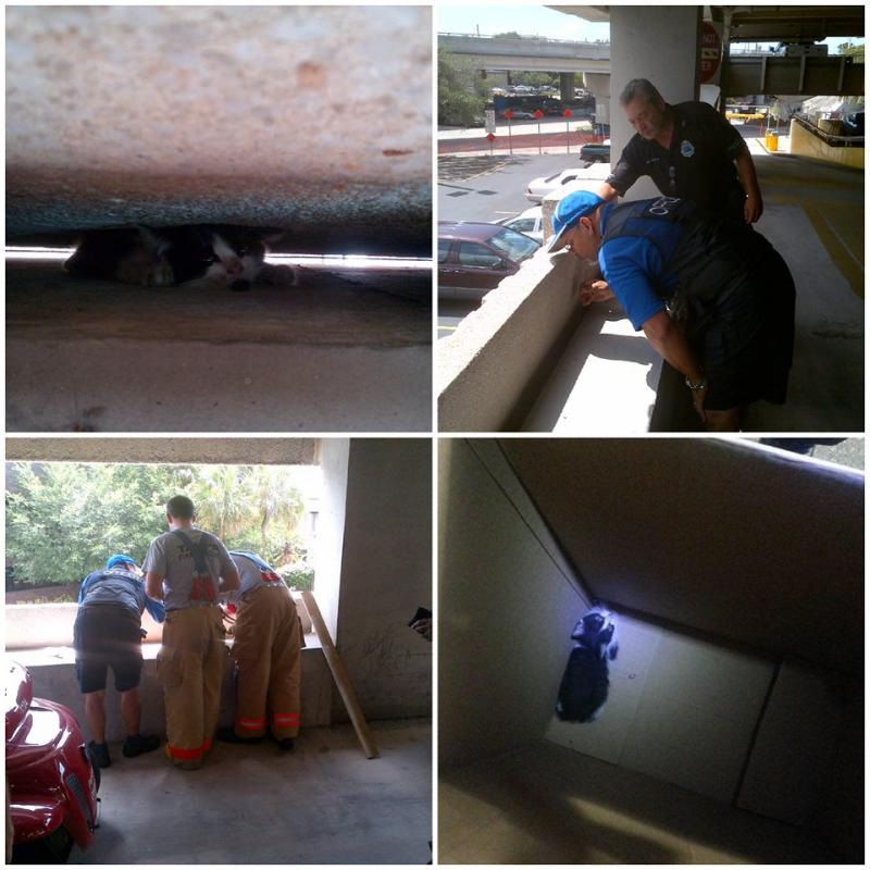 """Montage of photos of """"WallKitty"""" rescue in Tampa"""