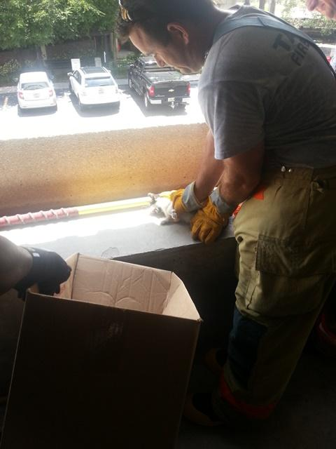 Tampa Firefighter Holland Houtz needed his gloves to protect him from the cat, unhappy despite being freed from the wall.