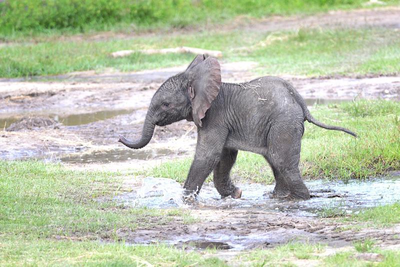Amazoncom Lucky Elephants Tusk Sculpture Ivory African