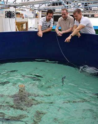 Researchers with the UM Rosenstiel School of Marine and Atmospheric Science look at a tank of mahi-mahi.