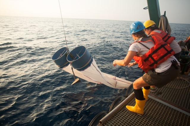 Researchers deploy nets to collect a plankton sample