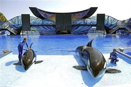 SeaWorld, The Owner Of Busch Gardens, Reported Declines In Its Attendance  This Week.