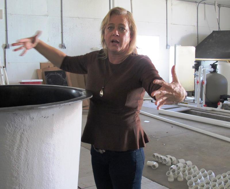 Dr. Dana Wetzel shows off one of the fish tanks used in the experiments