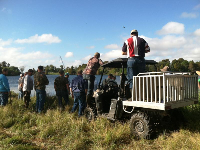 Volunteers and veterans look on as one of the gators is captured and shot.