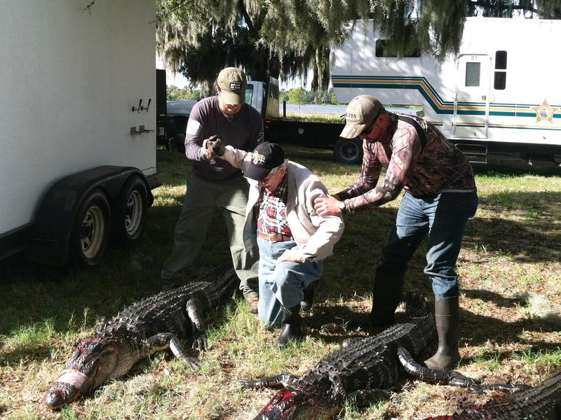 Two young veterans help WWII veteran Tracy Taylor to kneel with the three gators from their successful alligator hunt.