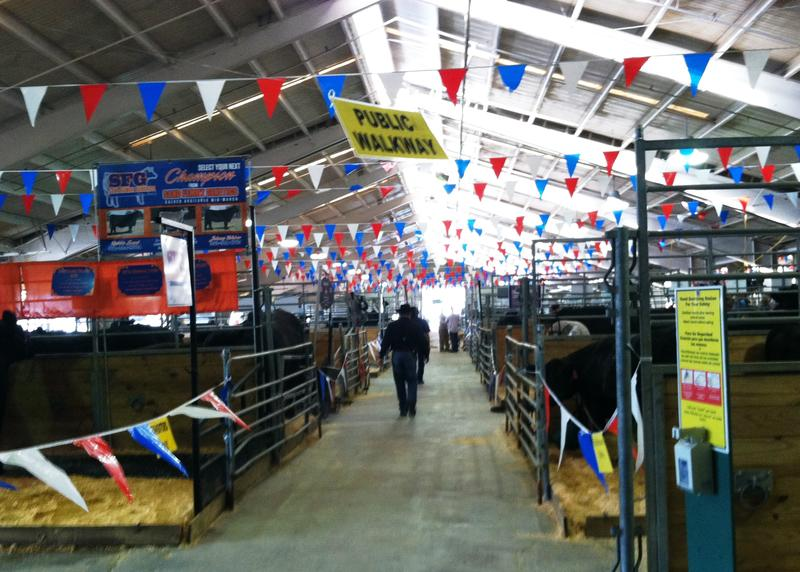 Inside the cattle barn at the Florida State Fair.