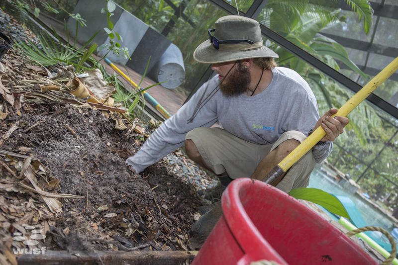 GreenDreams employee Ian Bonnes prepares the ground before planting a new banana tree.