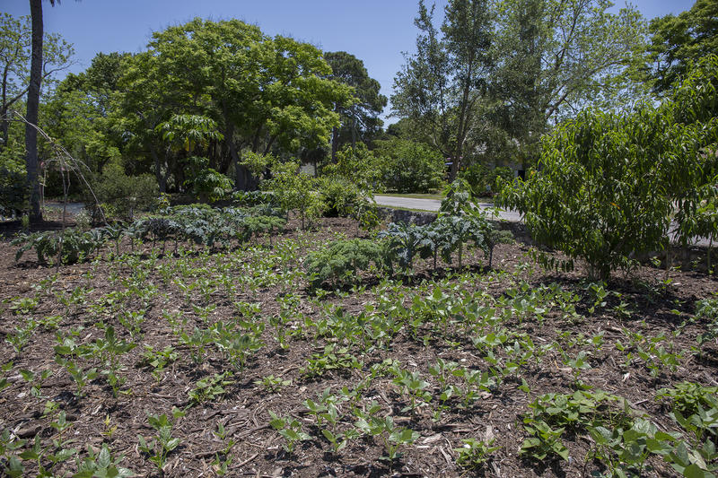 "Local realtors refer to Jim Kovaleski's New Port Richey neighborhood as the ""garden district"" because of how his urban garden has caught on with his neighbors. There are now eight front yard gardens, some of which Kovaleski manages."