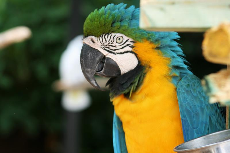 Many of the exotic birds at Sarasota Jungle Gardens have come from pet owners who can no longer care for their birds.