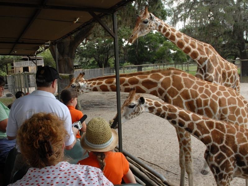 Melissa Layton and Katie Higgins feed giraffes.