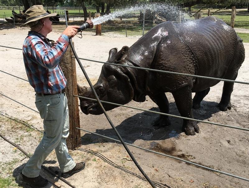 Lex Salisbury hoses down a rhino.