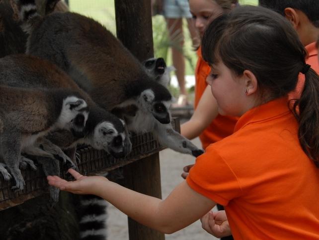 Sarah Higgins feeds a lemur.