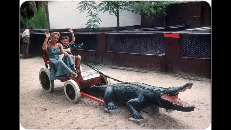 An alligator farm in St. Augustine