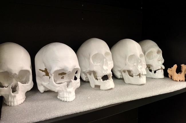 These 3-D printings of skulls are used as the basis for the clay re-creations.
