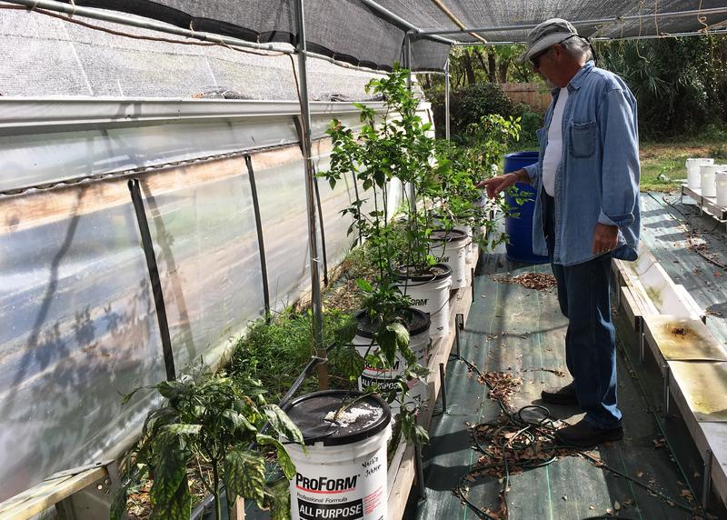 Garden manager Will Carey checks on peppers planted in the hydroponics section behind the greenhouse.
