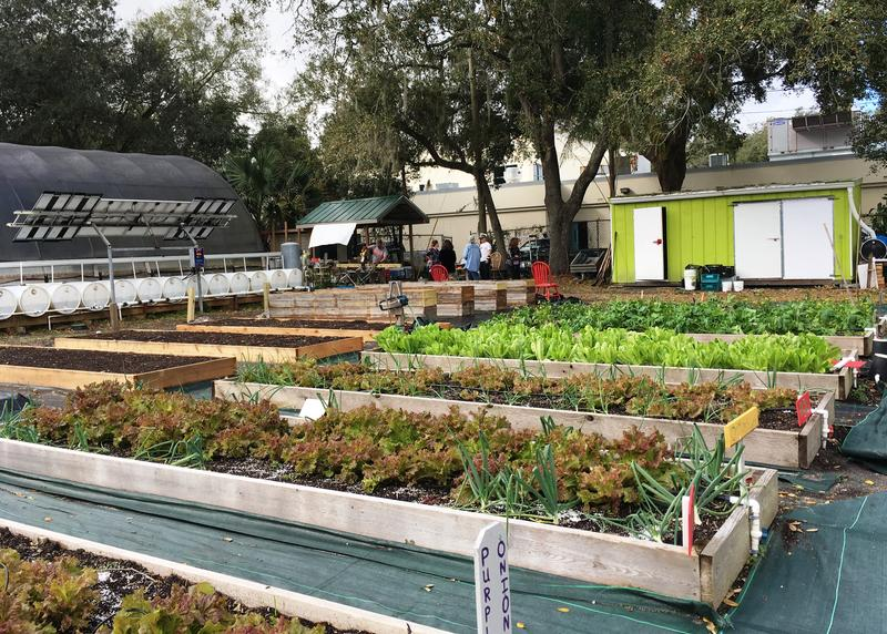 Tampa's sustainable garden expanded, to the left, to include 10 beds for the Veterans' Garden.