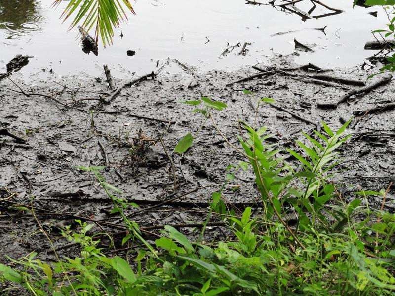 Muck on the creek shoreline