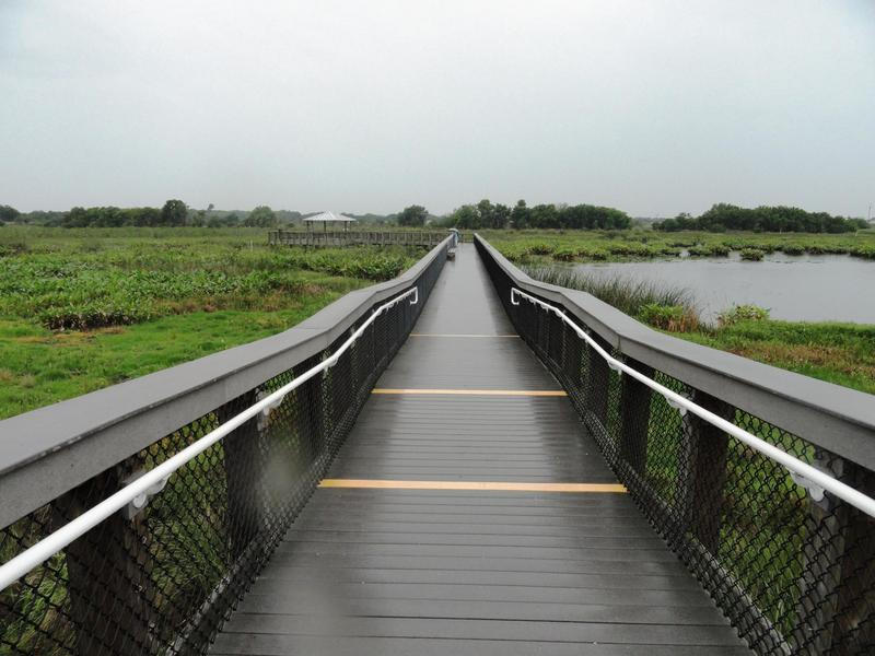 Boardwalk at Celery Fields