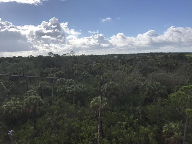 The first zip line sends you six stories above palms, pines and oak trees.