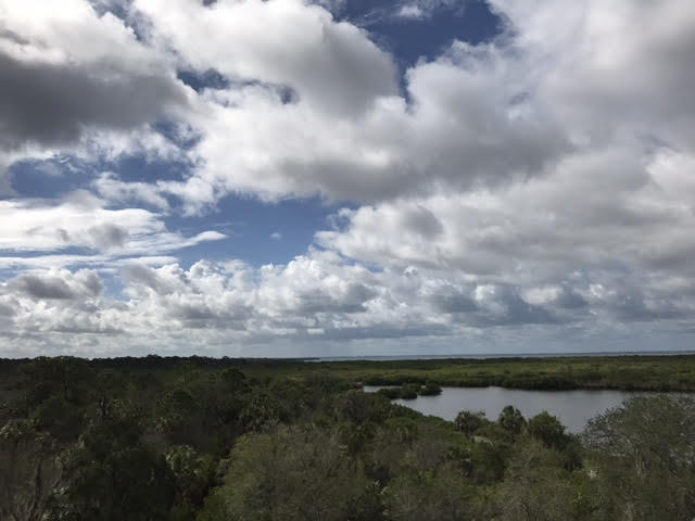 From the top of the zip line towers you get sweeping views of the Mobbly Bayou Wilderness Preserve and Tampa Bay.