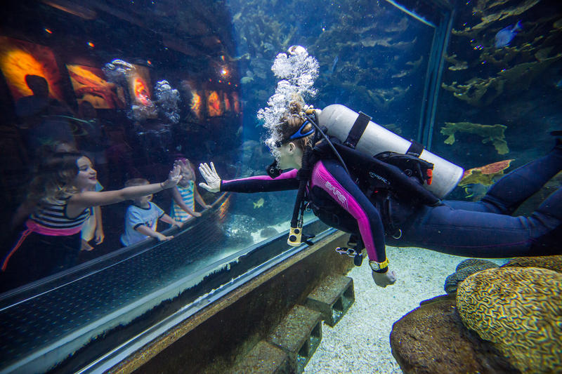 Gov. Rick Scott was at the Florida Aquarium in Tampa Tuesday to announce that 60 million tourists visited the state over the first half of 2017.