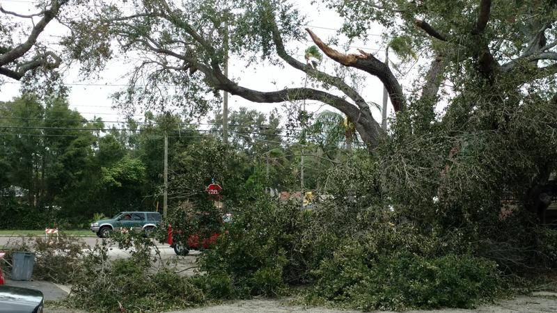 A massive tree collapsed at Kenwood & Drew in Clearwater.
