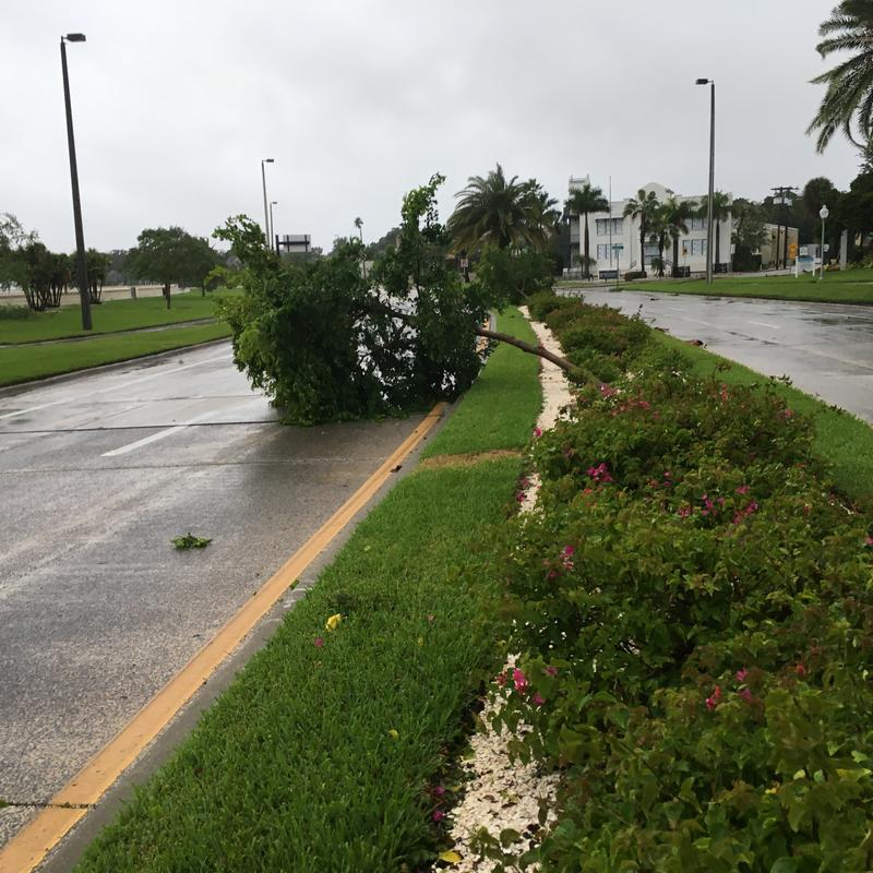 A tree down on Bayshore Boulevard in Tampa.