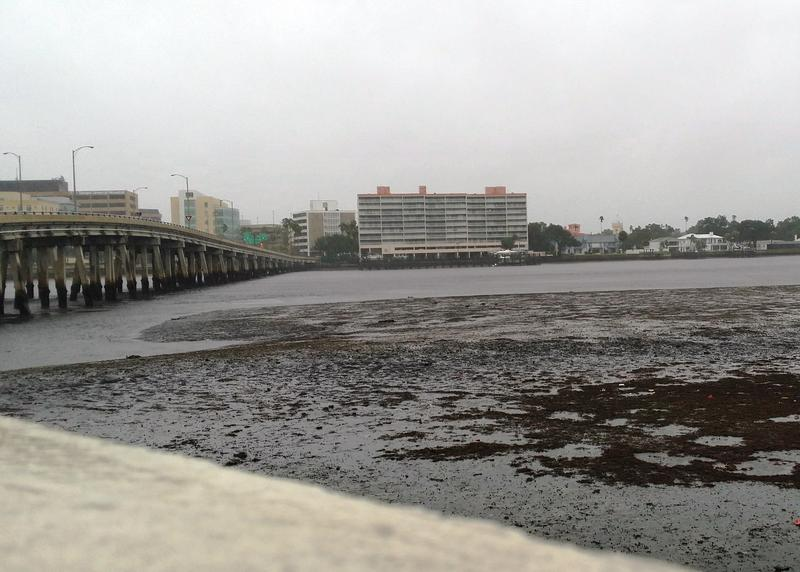 Receded waters of Tampa Bay along Bayshore Boulevard in Tampa.