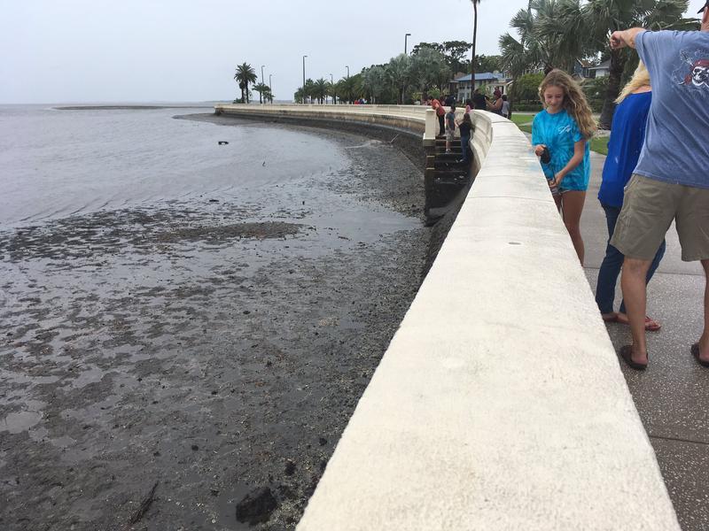 Tampa Bay drains along Bayshore Boulevard in Tampa ahead of Hurricane Irma.