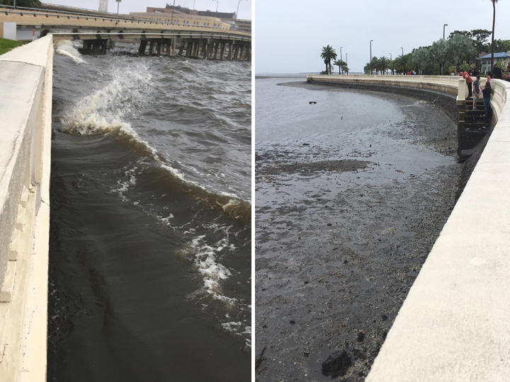 Tampa Bay empties of water (right) before Hurricane Irma on Sunday and is full again (left) on Monday.