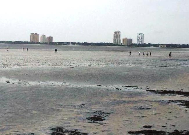 After water receded in Tampa Bay at Bayshore Boulevard, people ventured out onto the flats.