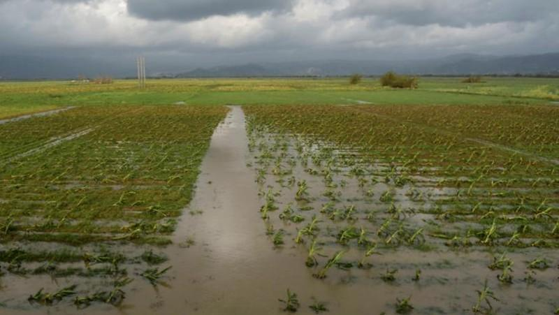 Hurricane Maria destroyed 80 percent of Puerto Rico's crops and caused roughly $780 million in damage. A Sarasota-based nonprofit hopes to make a difference by sending 50,000 seeds to depressed regions of the island.