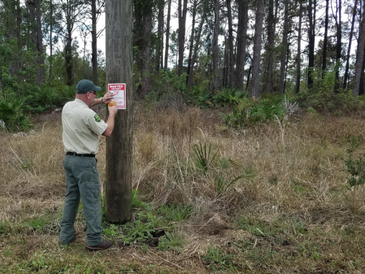 The Florida Forest Service is working alongside local law enforcement to catch the person or persons setting the fires.