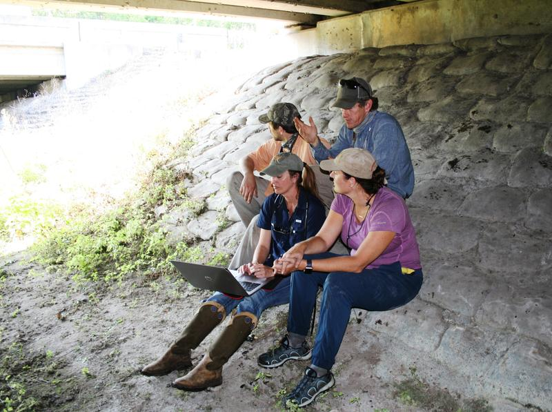 The Florida Wildlife Corridor team is joined by biologist Jen Korn, who set up a camera trap under Interstate 4 to track wildlife.