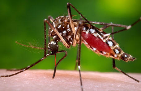The Florida Department of Health has several tips on how to take the necessary precautions against mosquito-borne illnesses.
