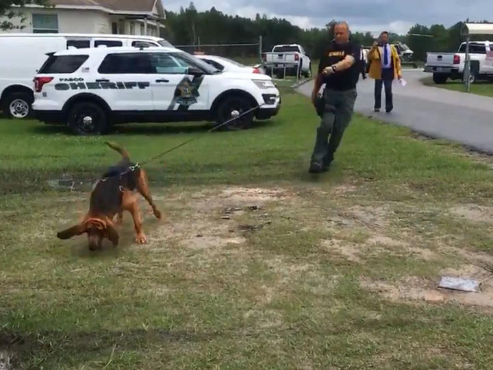 Pasco Sheriff's Office K9 Buster is tracking a scent taken from a deputy during a demonstration of scent kits.