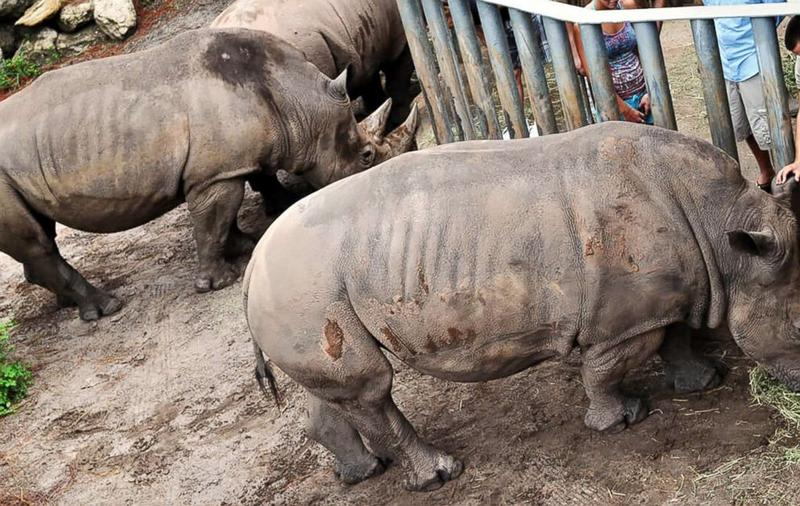 Guests participate in the 'Rhino Encounter' at Brevard Zoo in Melbourne, FL.