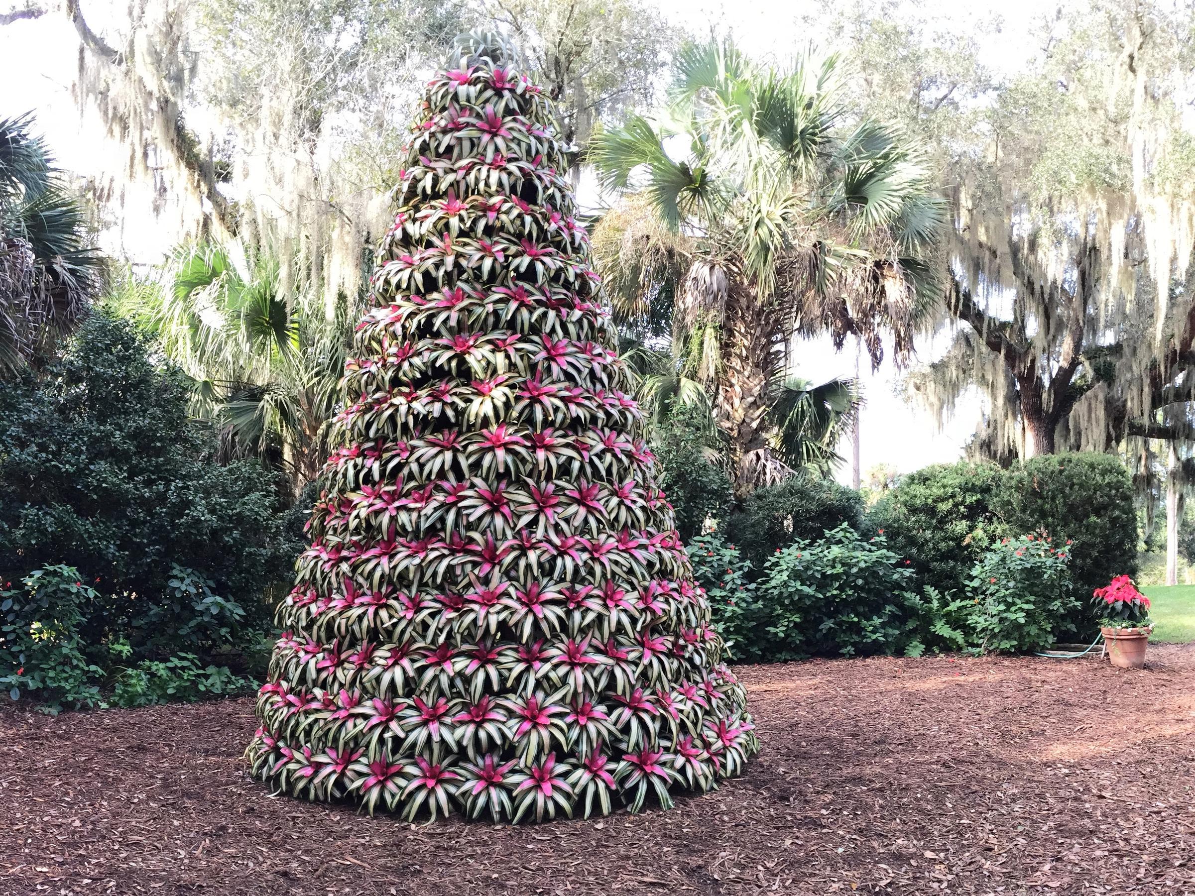 Watch: Bok Tower Gardens Bromeliad Tree | WUSF News