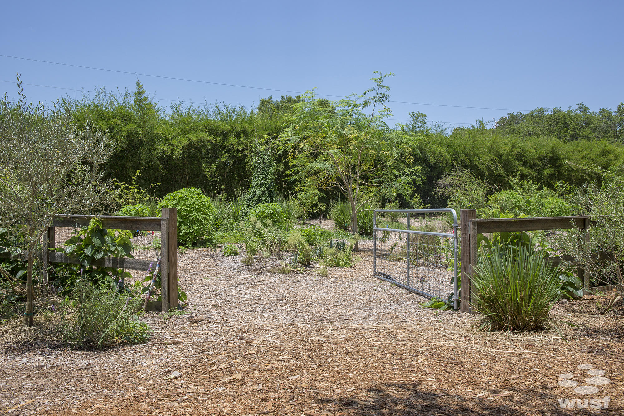 the business of edible landscaping wusf news