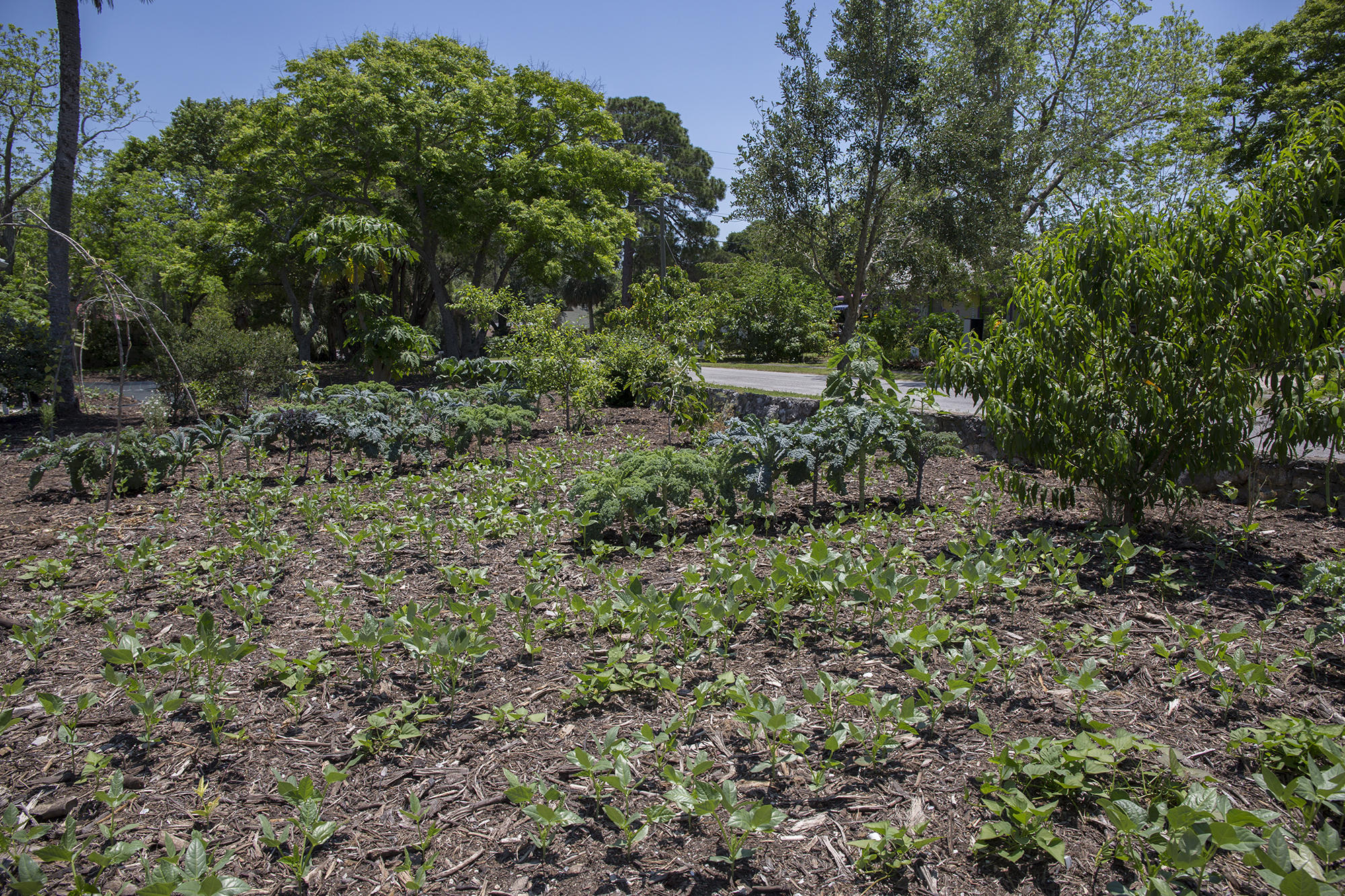 Florida Matters Residential Landscaping Trends Wusf News
