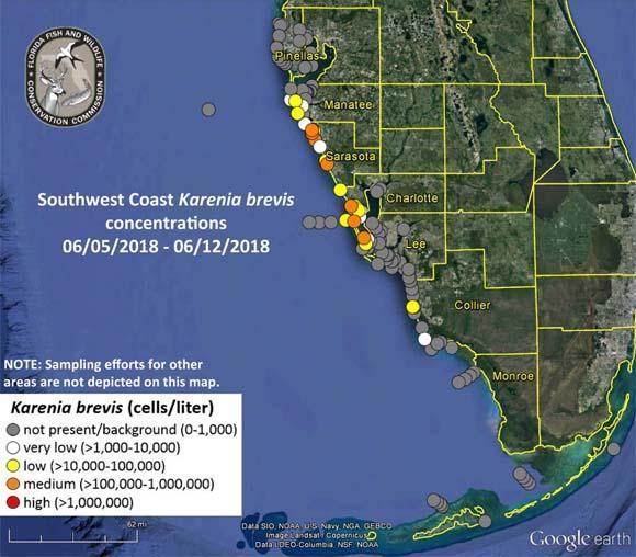 Red Tide Causing Fish Kills Respiratory Irritations In Sarasota