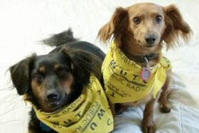 Rosie and Lily McFadden enjoying their new WUTC doggie bandanas